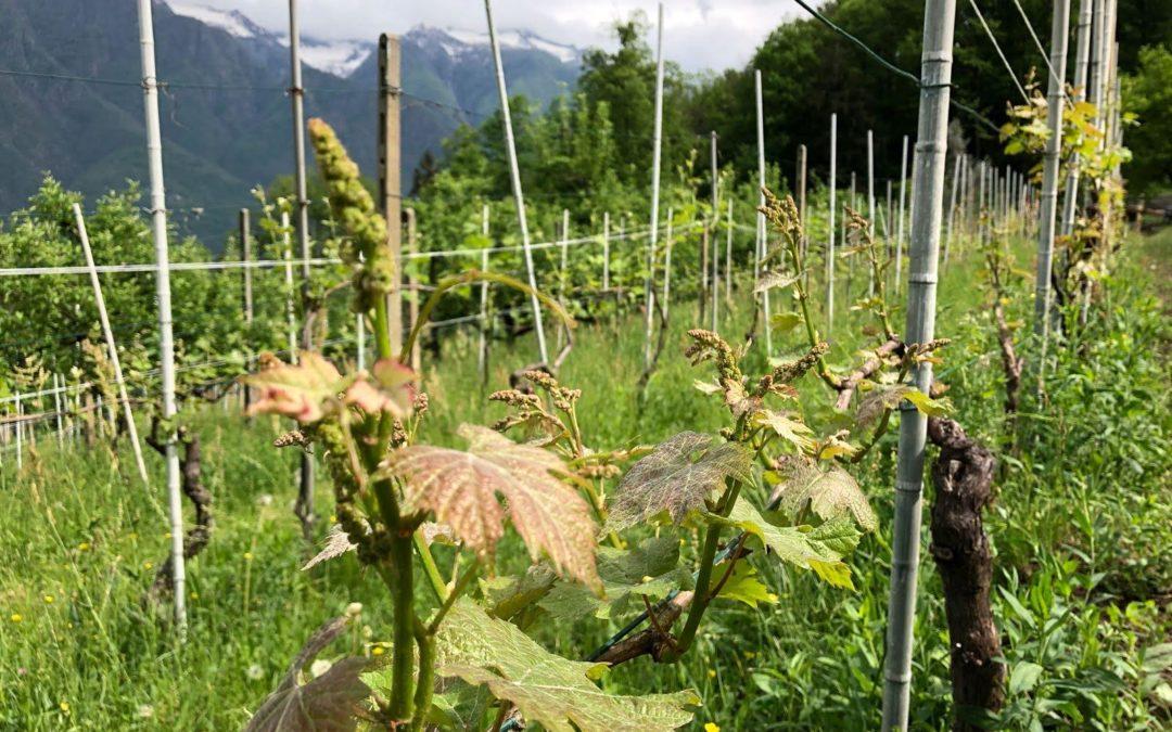 Tra vigne e poesia